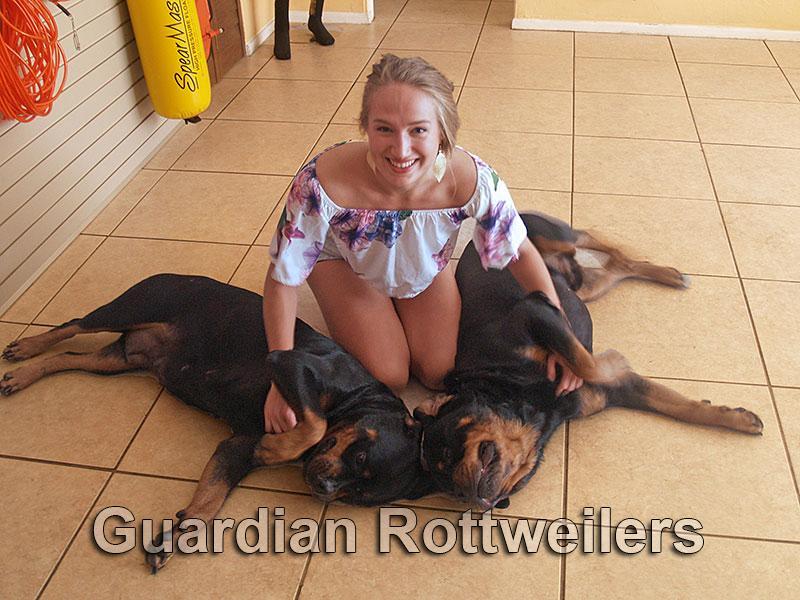 Rottweiler Puppies Miami